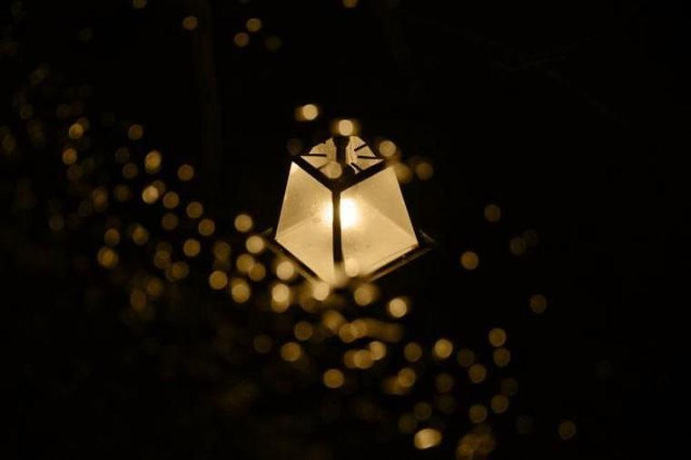 lucciole-al-buio