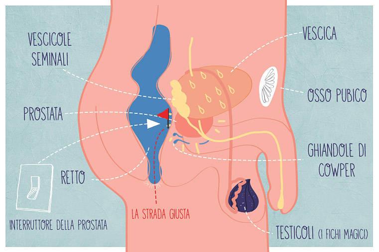 tavola-anatomica-prostata